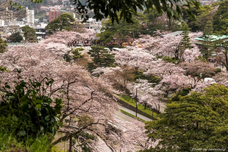 2015.04.04金沢城の桜13