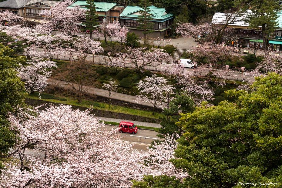 2015.04.04金沢城の桜11
