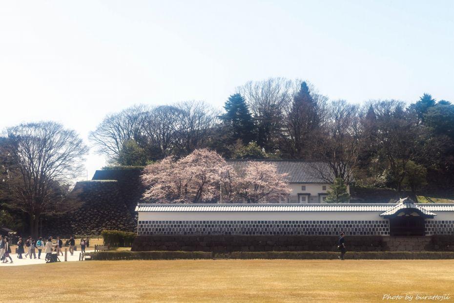 2015.04.04金沢城の桜8