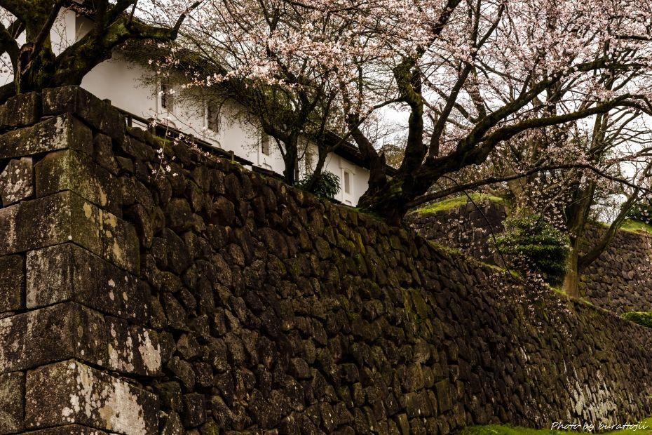 2015.04.04金沢城の桜6