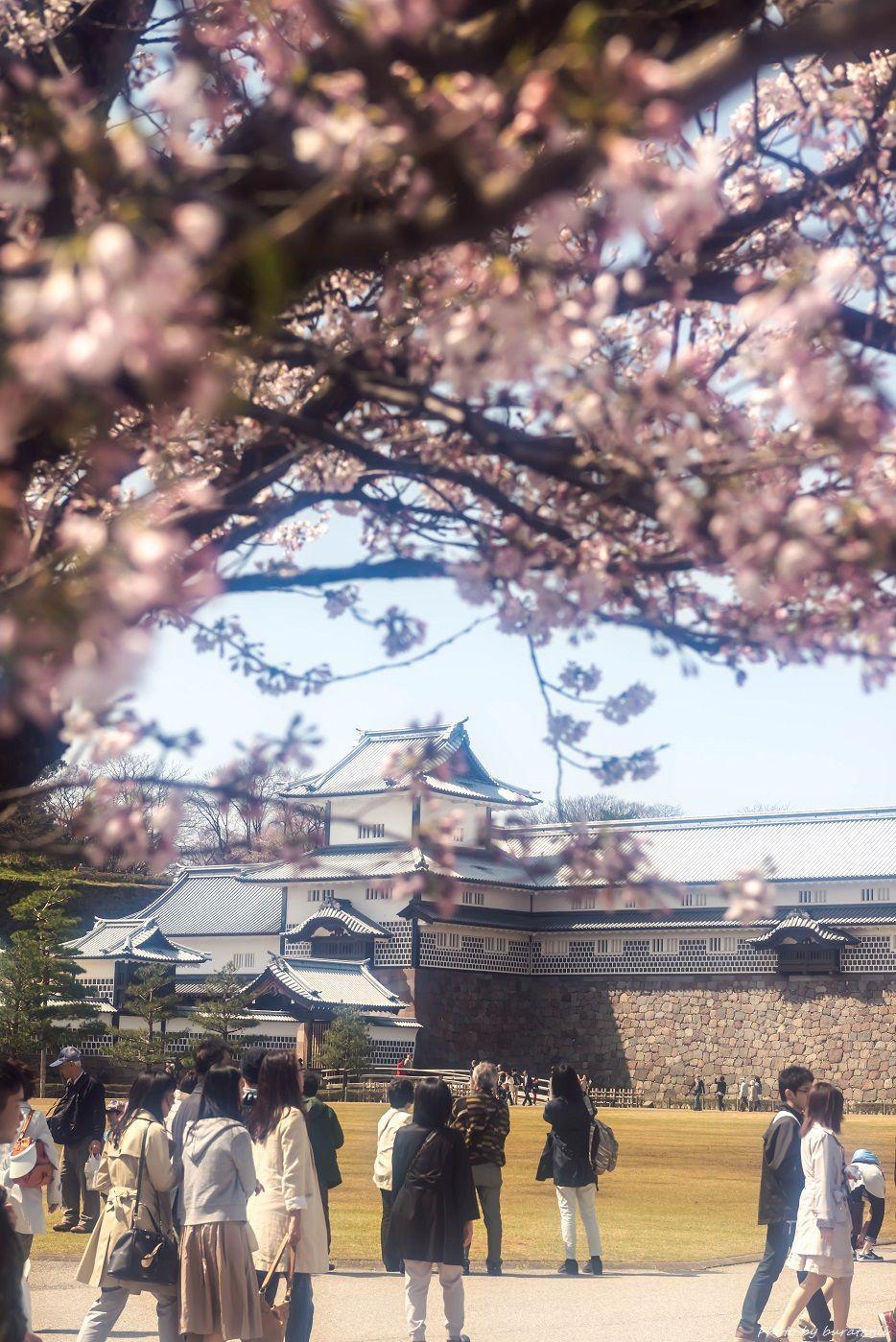 2015.04.04金沢城の桜5