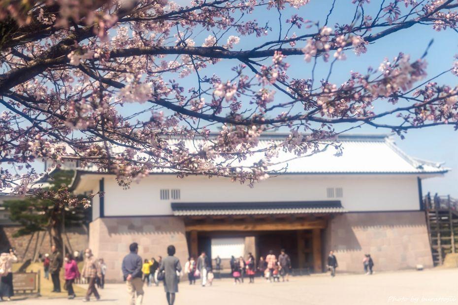 2015.04.04金沢城の桜4