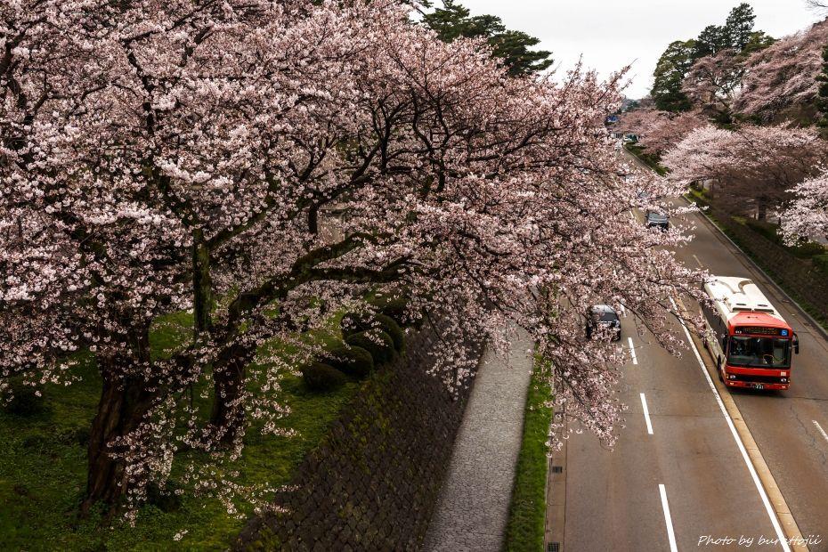 2015.04.04金沢城の桜2