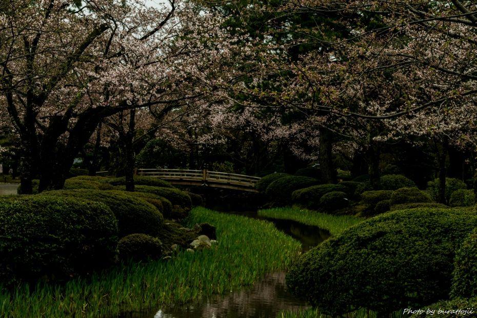 2015.04.04兼六園の緑鮮やか3