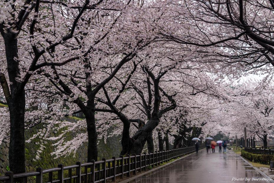 2015.04.06雨の金沢城5
