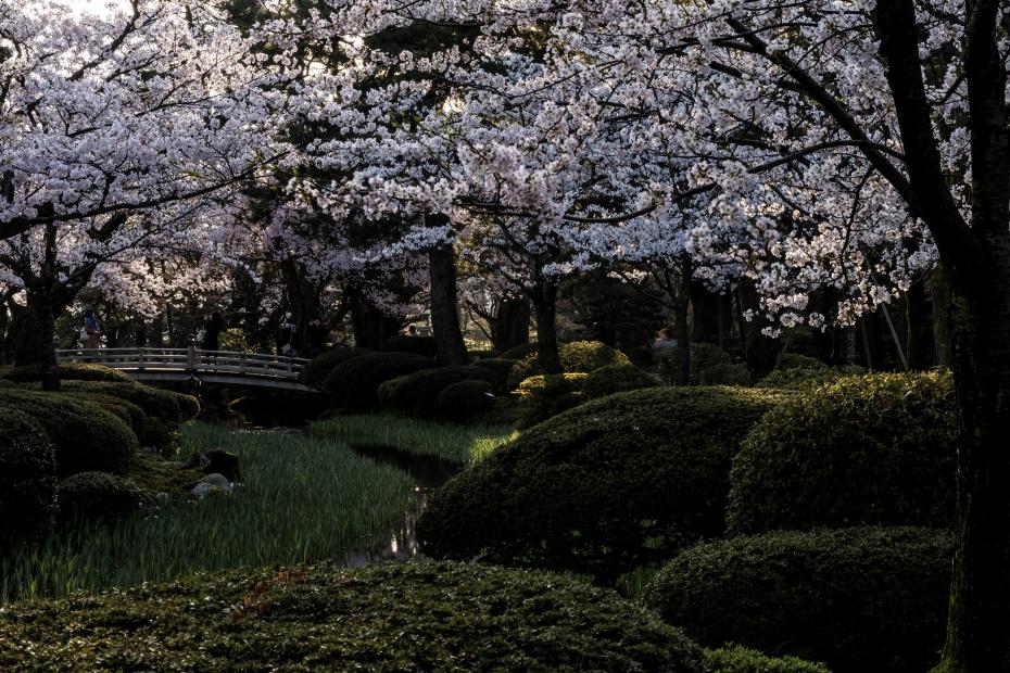 2015.04.09兼六園の朝3