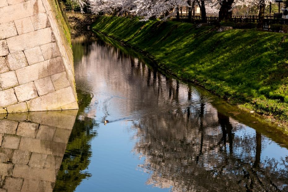2015.04.09金沢城の桜12