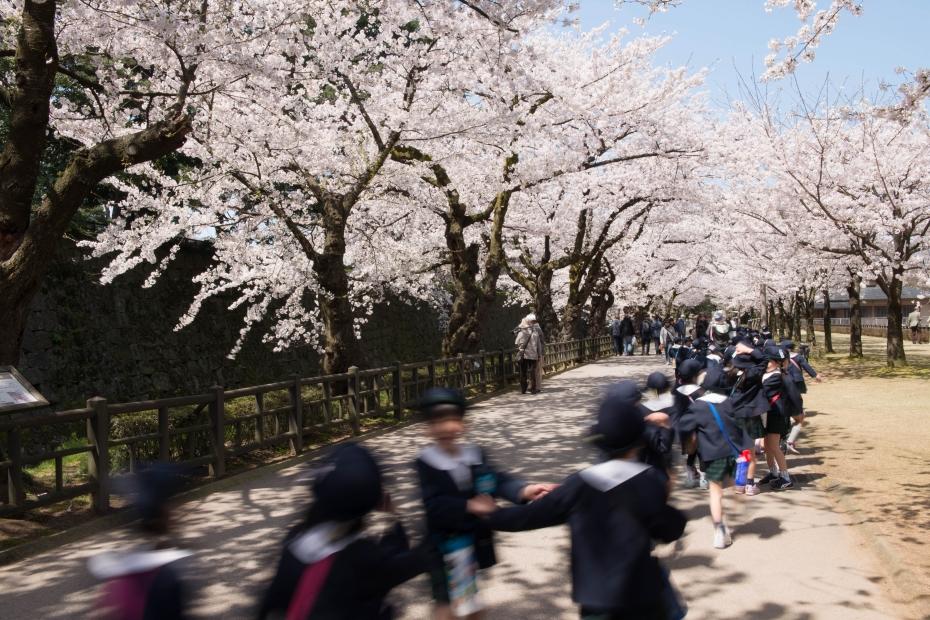 2015.04.09金沢城の桜10