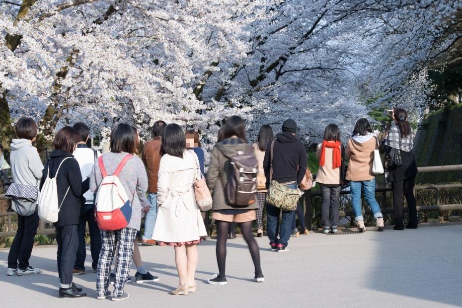 2015.04.09金沢城の桜11