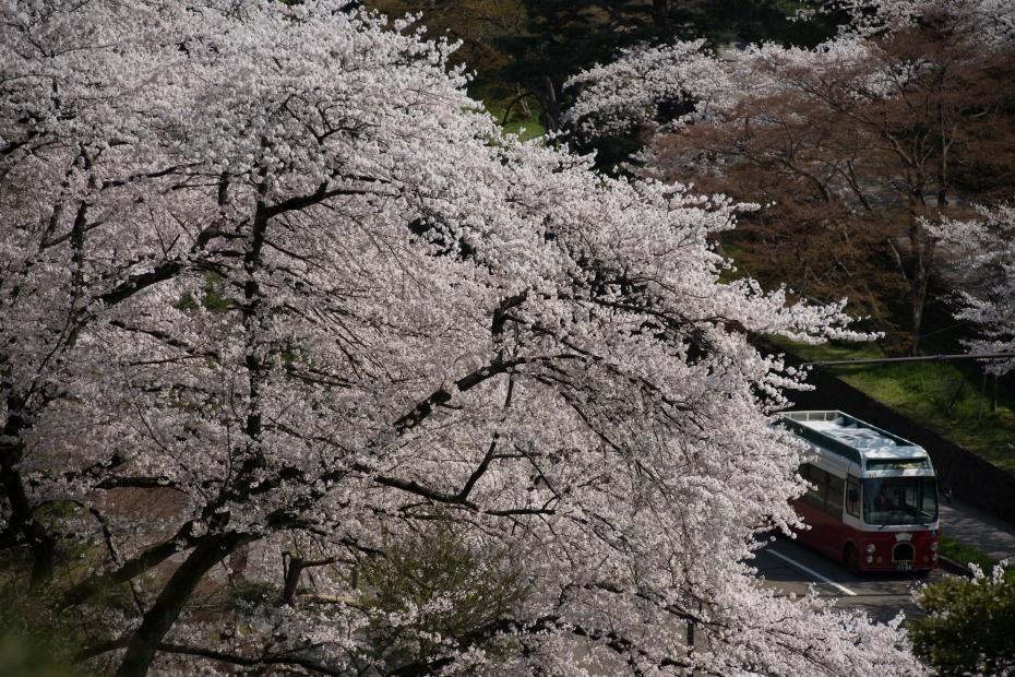 2015.04.09金沢城の桜3