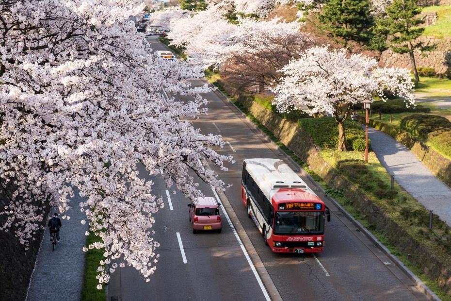 2015.04.09金沢城の桜2