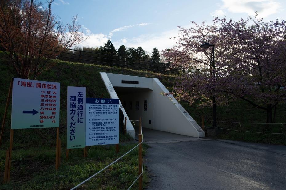 2015.04.15三春滝桜5