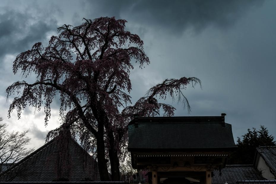 13.2015.04.15三春町なか法華寺桜