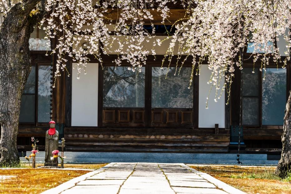 8.2015.04.15三春町なか高乾院桜