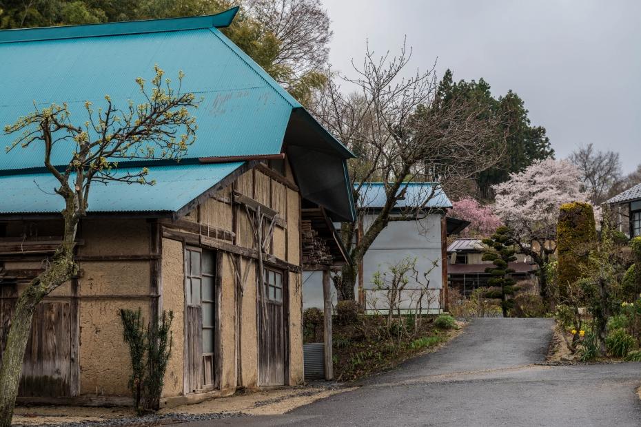 8.2015.04.16天神夫婦桜周辺