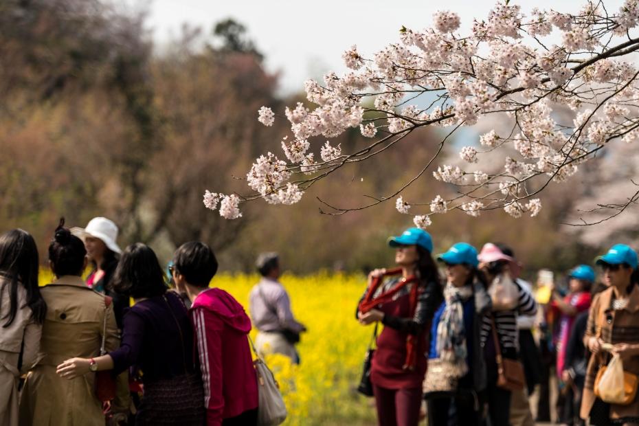 2015.04.16花見山14