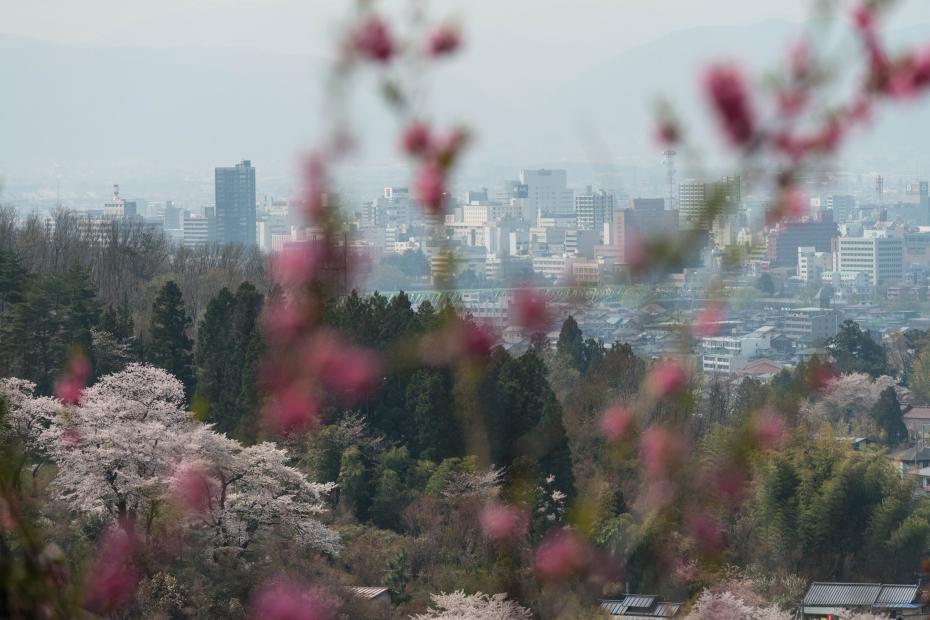2015.04.16花見山9