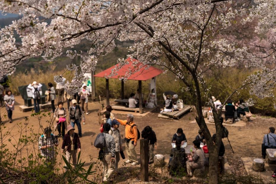 2015.04.16花見山8