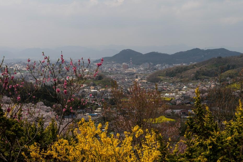 2015.04.16花見山7
