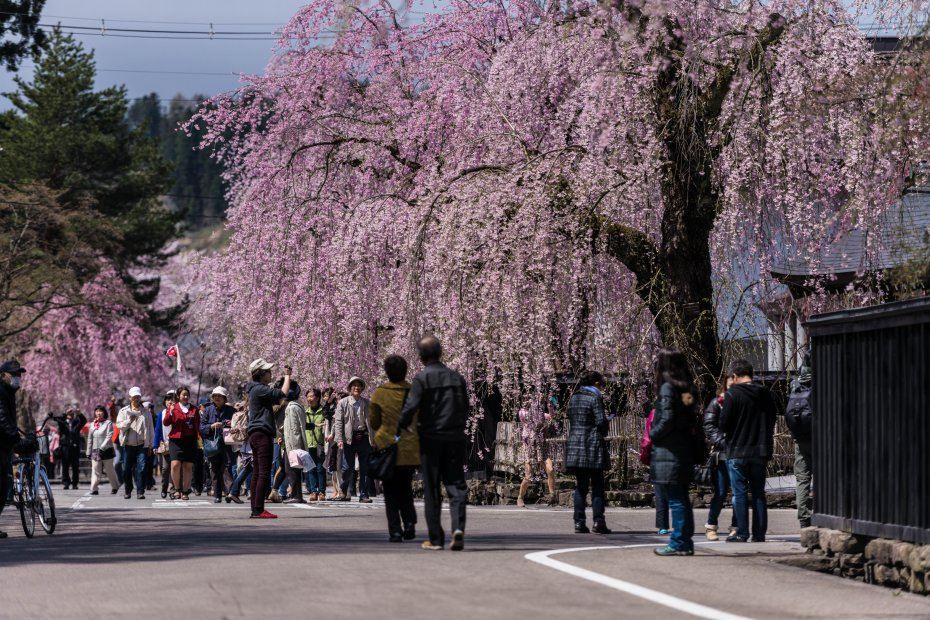 2015.04.21角館の桜24