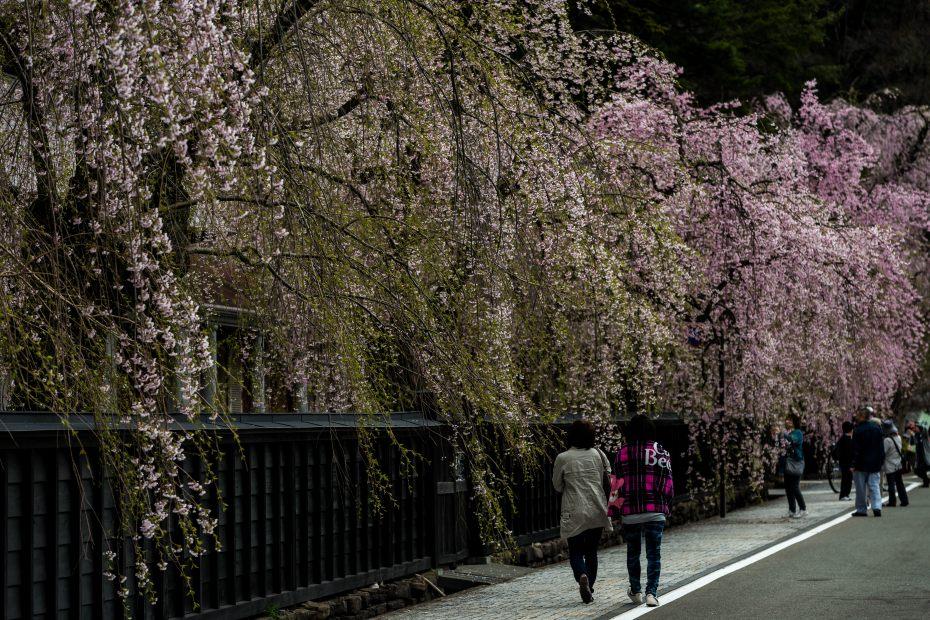 2015.04.21角館の桜22