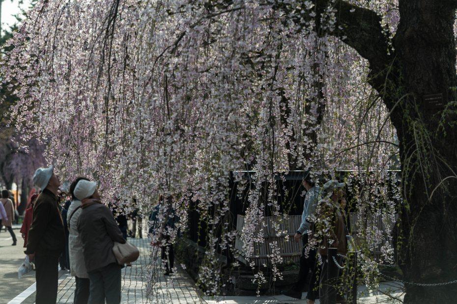 2015.04.21角館の桜23