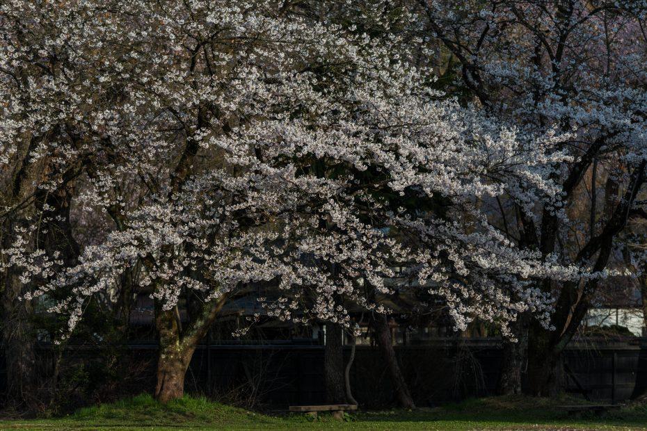 2015.04.21角館の桜20