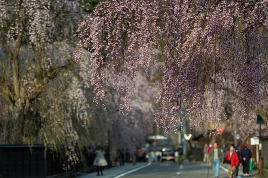 2015.04.21角館の桜21