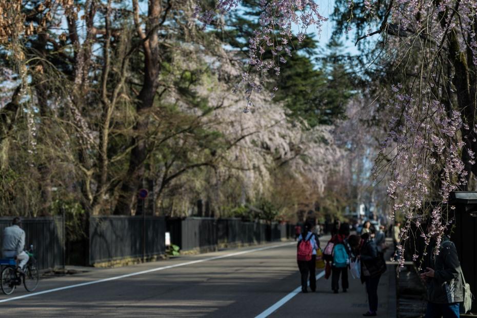 2015.04.21角館の桜19