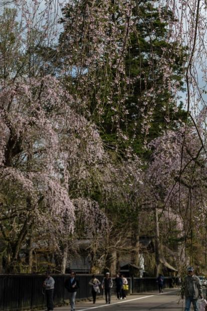 2015.04.21角館の桜15