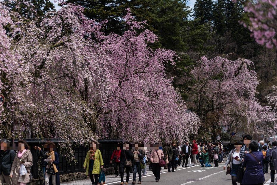 2015.04.21角館の桜11