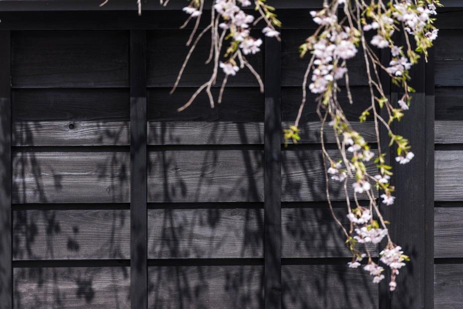 2015.04.21角館の桜10