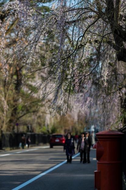 2015.04.21角館の桜8