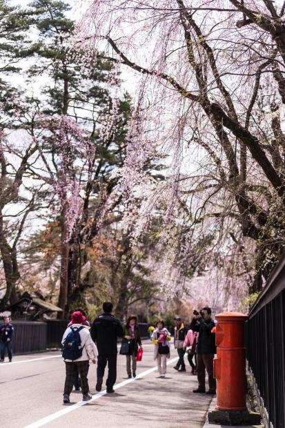 2015.04.21角館の桜9