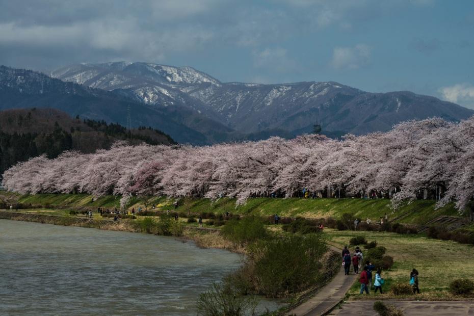 2015.04.21角館の桜1