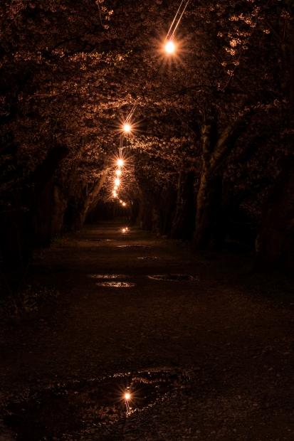 2015.04.21角館ライトアップ10