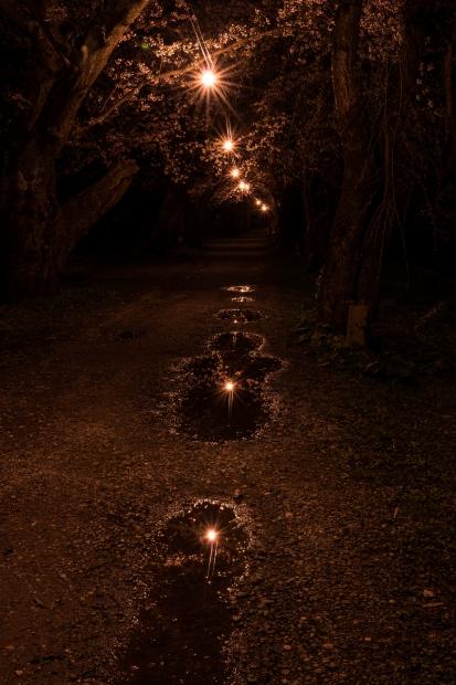 2015.04.21角館ライトアップ11
