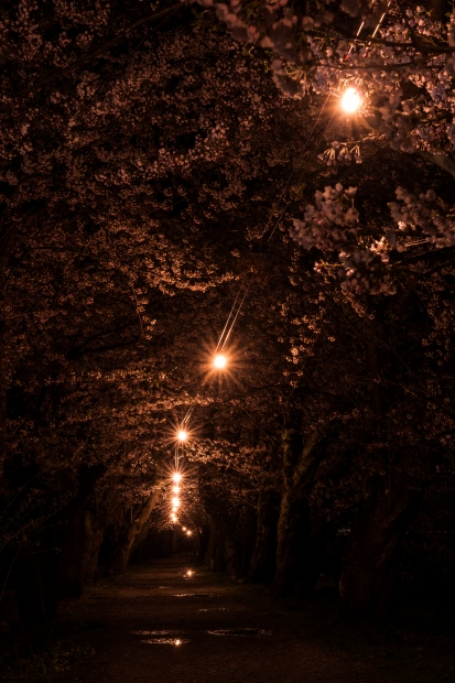 2015.04.21角館ライトアップ9