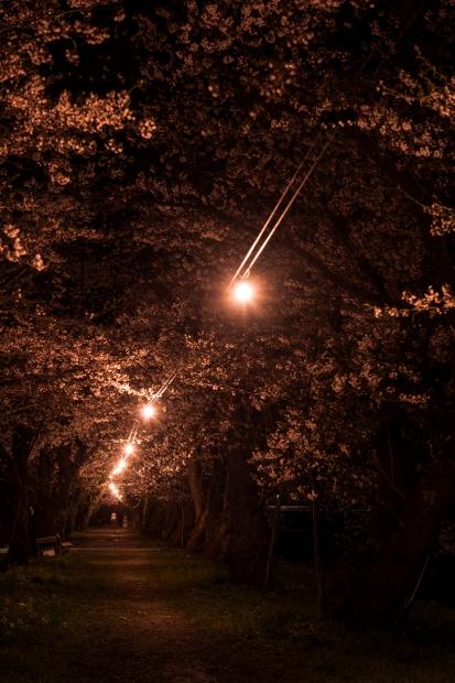 2015.04.21角館ライトアップ8
