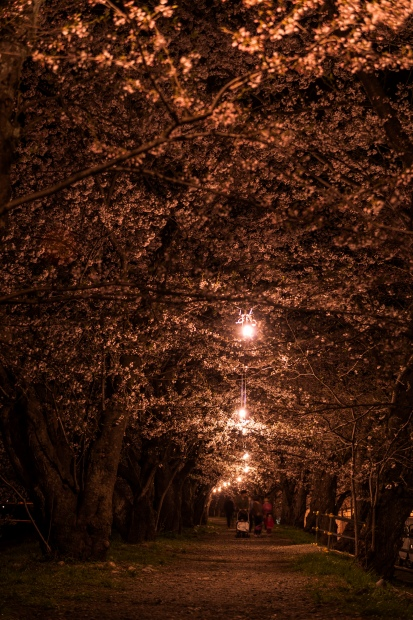 2015.04.21角館ライトアップ7