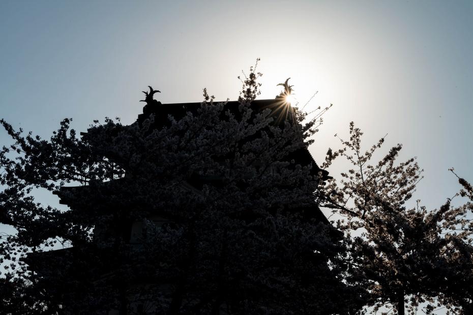 2015.04.23弘前さくらまつり21