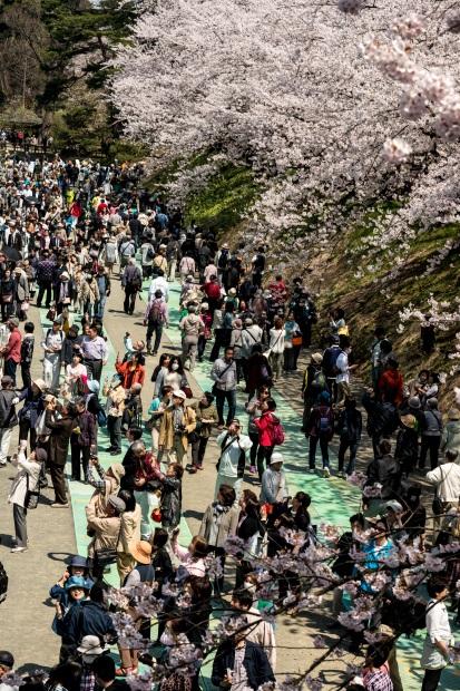 2015.04.23弘前さくらまつり14
