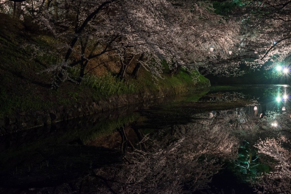 2015.04.23弘前さくらまつり夜7