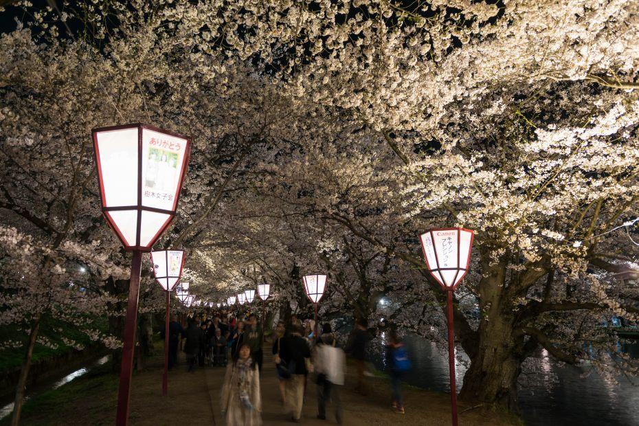 2015.04.23弘前さくらまつり夜4