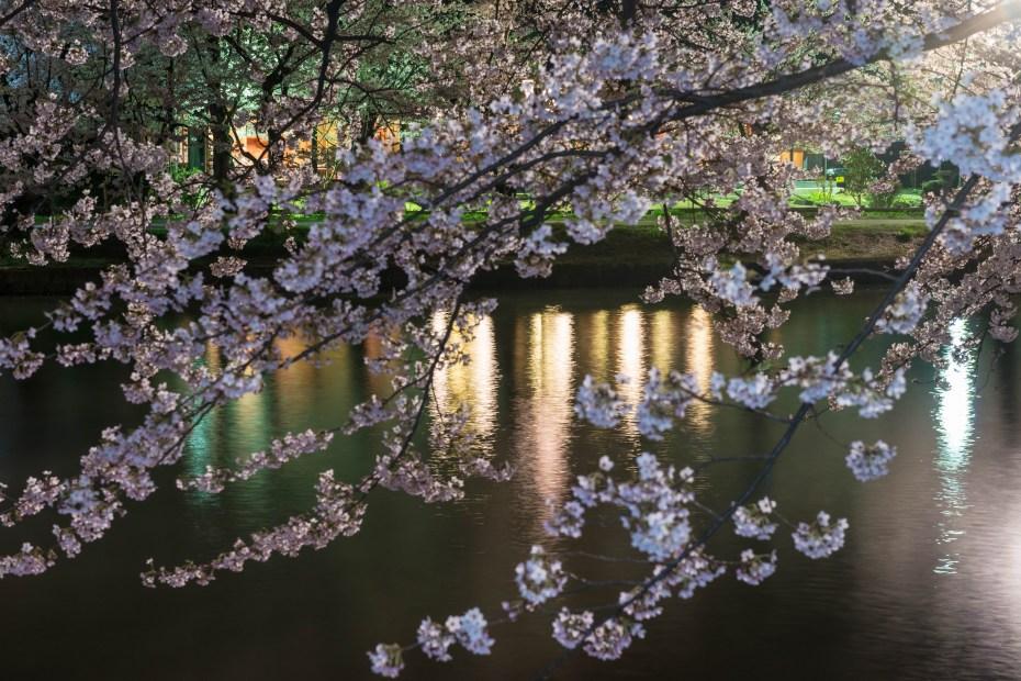 2015.04.23弘前さくらまつり夜3