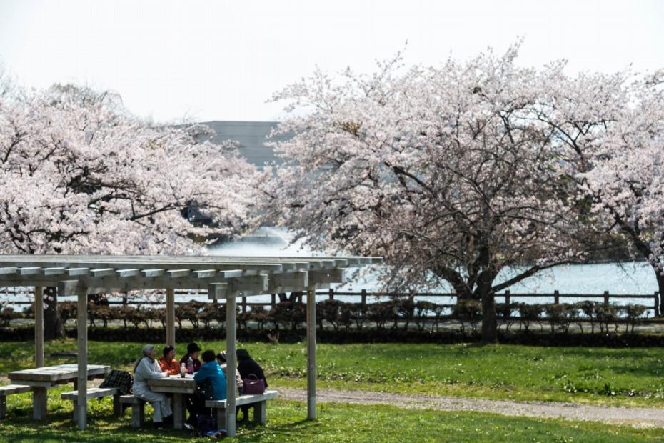 2015.04.24猿賀公園の桜6