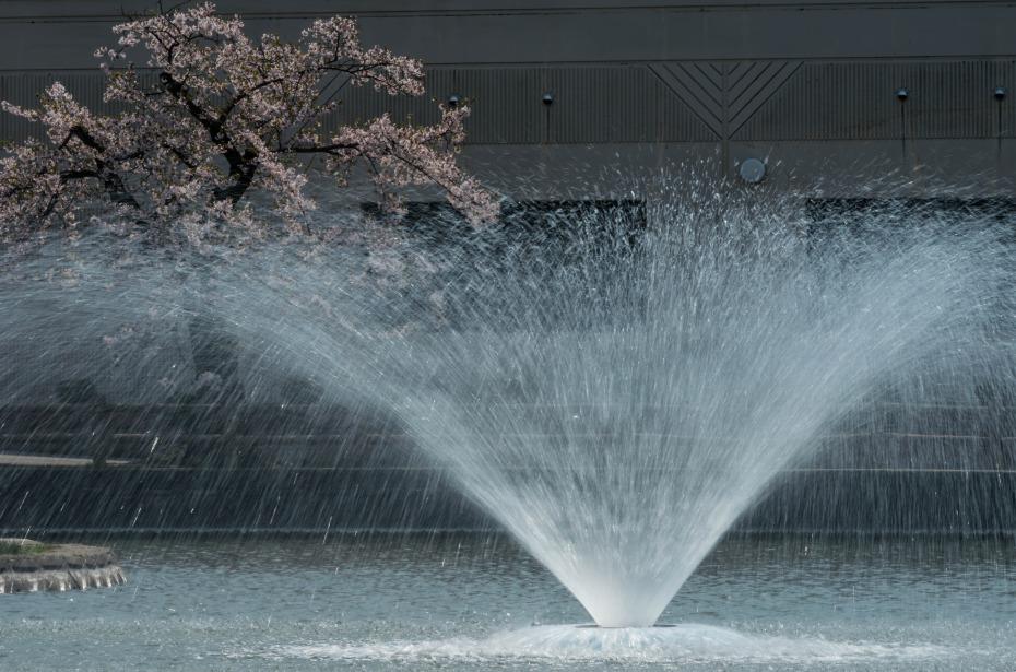 2015.04.24猿賀公園の桜1
