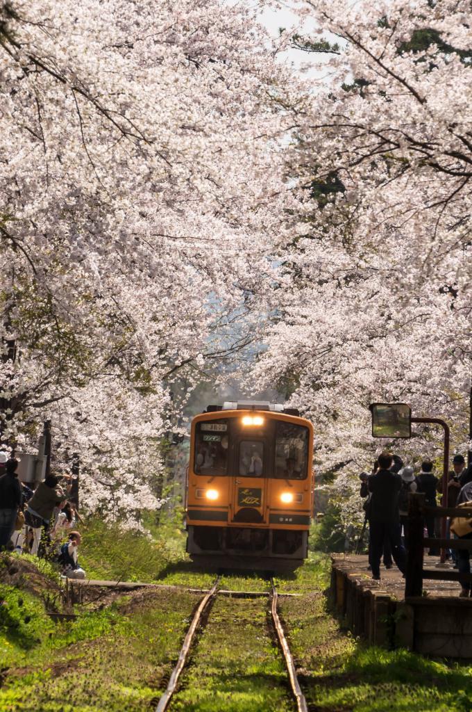 2015.04.25芦野公園の桜6