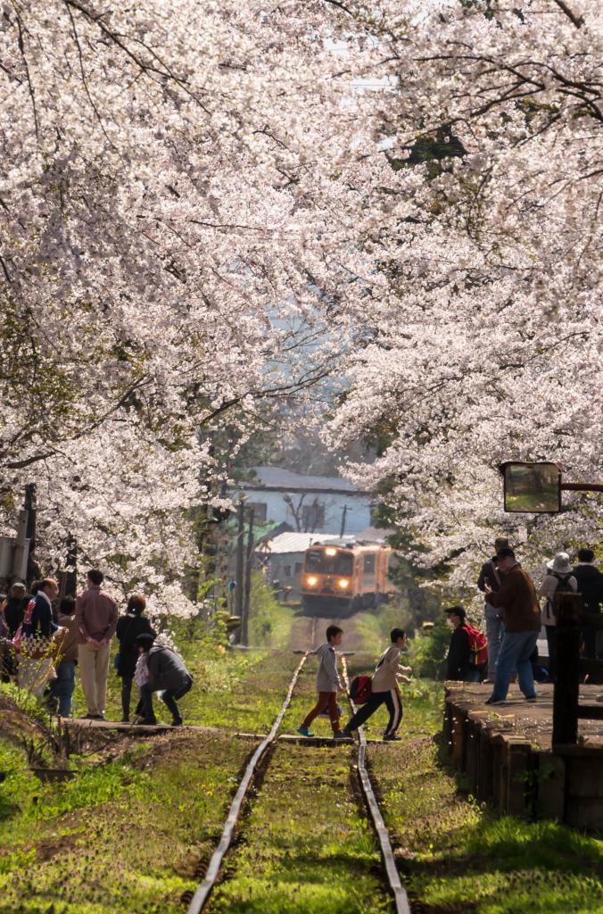 2015.04.25芦野公園の桜5