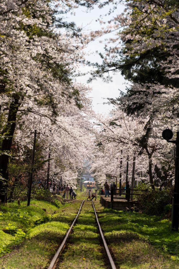2015.04.25芦野公園の桜4
